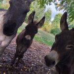 des animaux pour toutes la famille, nature et découverte en ariège